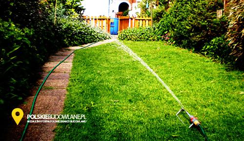 trawnik w ogrodzie